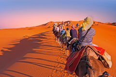Kamelwohnwagen, der die Sanddünen in Sahara Desert durchläuft, Lizenzfreie Stockbilder