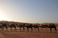 Kamelwohnwagen in der Sahara-Wüste Lizenzfreie Stockbilder