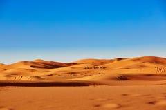Kamelwohnwagen in der Sahara-Wüste Stockbilder