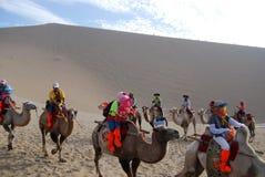 Kamelwohnwagen in der Wüste Stockbilder