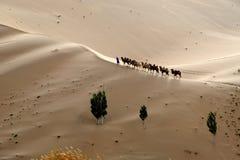 Kamelwohnwagen in der Wüste stockbild