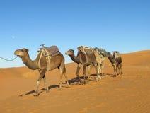 Kamelwohnwagen in der Wüste stockfotografie