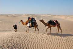 Kamelwohnwagen in der Wüste Sahara stockbilder
