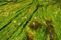 Kamenice river Stock Image