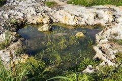 Kamenitza lub chwilowy podeszczowy wodny basen z li?ciastym wodnym crowfoot zdjęcia stock