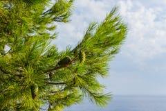 kamenjak de chapeau de pin Photo libre de droits