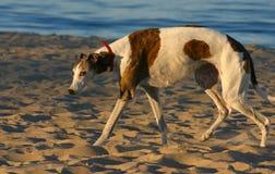 kamera besegrad hund som ser in mot Royaltyfri Bild