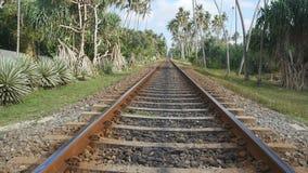 Kamera bewegen sich vorwärts entlang die Eisenbahn mit exotischer tropischer Natur am Hintergrund Die Schienenstränge schließen o stock video
