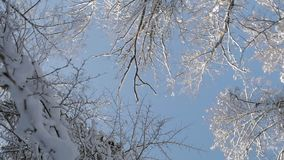 Kamera, die unter die Wipfel umfasst mit Schnee im Winterwald sich dreht stock video