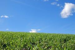 Kamera gezeigt auf Gras Stockfotos