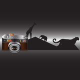 Kamera gulligt djurliv Arkivfoton