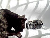 Kamera i czarny kot na bia?ym tle zdjęcie stock