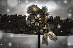 Kamera i zima krajobraz Obrazy Royalty Free