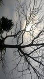 Kamera klickt nature's Schönheit an lizenzfreie stockfotos
