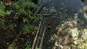 Kamera lata depresj? nad bagnami w kierunku czystego jeziora 4K zdjęcie wideo