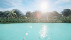 Kamera lata nad pięknym jeziorem z piękną rybą na tropikalnej przegranej wyspie Piękna natura, drzewka palmowe zdjęcie wideo