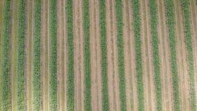 Kamera lata nad posianymi polami w Tuscany regionie w Włochy w wiosna ranku, cienie od chmur rusza się zbiory wideo