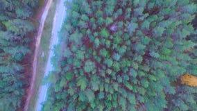 Kamera lot nad drogą w drewnie Zwarty las z drogą z bieg mężczyzna i samochodem na poboczu Od above antena zdjęcie wideo