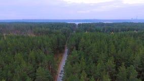 Kamera lot nad drogą w drewnie Zwarty las z pustą drogą od above antena zbiory wideo