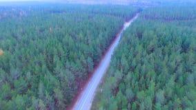 Kamera lot nad drogą w drewnie Zwarty las z pustą drogą od above antena zbiory