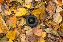 Kamera obiektyw nad barwionym liścia tłem w jesieni Zdjęcie Stock