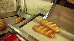 Kamera podąża bochenek chleb na konwejeru pasku zbiory