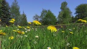 Kamera pokazuje łąkę i ogród w lecie zbiory