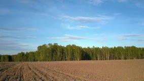 Kamera rusza się brzoza las przez przeorzącego pole zbiory