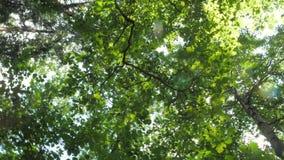 Kamera som roterar under trädblast som täckas med frodiga gröna sidor arkivfilmer