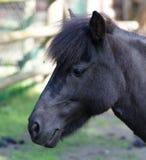 kamera szukać koni Obraz Royalty Free