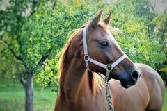 kamera szukać koni Fotografia Royalty Free