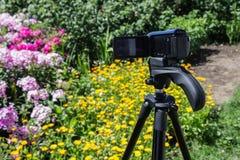Kamera wideo na tripod w ogródów krótkopędach kwitnie fotografia stock
