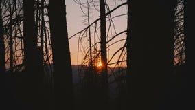 Kamerabewegungen zur rechten aufschlussreichen schönen Sonne, die unten auf Sonnenuntergang zwischen dunkle Bäume in der Yosemite stock video