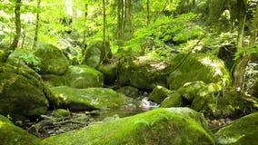 Kamerafahrt durch den Wald stock video footage