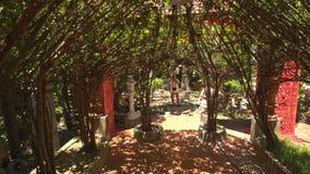 Kameraflyttningar till och med dekorativt träd gräver special fullvuxet stock video
