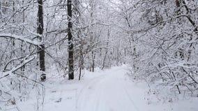 Kameran flyger till och med vinterskog bland detäckte trädfilialerna arkivfilmer