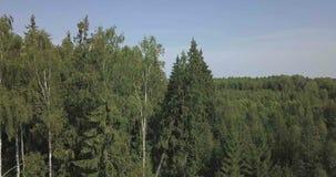 Kameran går från blasten av träden till jordningen lager videofilmer