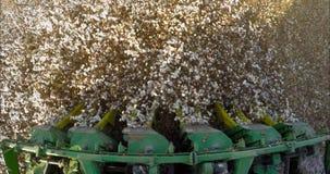 Kameran monterade på en bomullsskördearbetareplockning i ett bomullsfält under solnedgång stock video