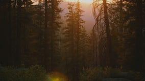 Kameran vippar på upp från härlig bergflodliten vik som ner flödar till att förbluffa skogsolnedgång på Yosemite, parkerar ultrar stock video