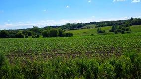 Kamerapanna av härlig frodig jordbruks- lantgårdlövverk Lantlig jordbruksmark för sommardag lager videofilmer
