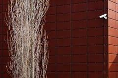 kamery drzewo zdjęcia stock