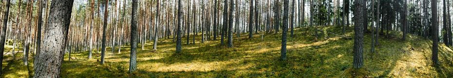 Kames (sowback) and pine forest. Kames (sowback) - sandy-pebble hills were formed as result of movement of ancient glaciers. Covered with pine forests on drained Stock Photo
