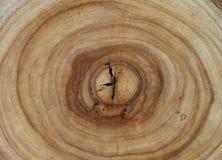 Kamforowa drewniana drzewnych pierścionków tekstura Obraz Stock