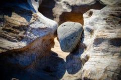 Kamień szczypający w dryftowym drewnie Fotografia Royalty Free