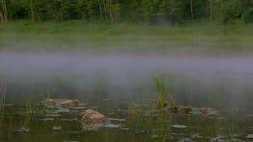 Kamień trawa pojawiać się w wodzie od rozpraszać mgłę lasem zbiory wideo