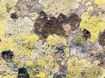 Kamień z liszaju tłem Zdjęcia Royalty Free