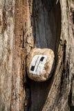 Kamień z obrazem w łamanym drzewnym bagażniku fotografia royalty free