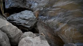 Kamień zbiory