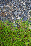 Kamień i trawa Fotografia Royalty Free