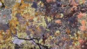 Kamień zakrywa z mech i liszajem Fotografia Royalty Free